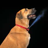 Stop Dog Barking Collars